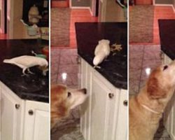 Friends Come In All Shapes And Sizes! Even Dogs And Birds! Don't Believe Me? Watch This!