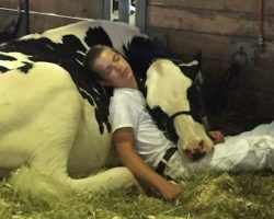 They May Not Have Taken Home The Prize, But A Boy And His Cow Won Our Hearts