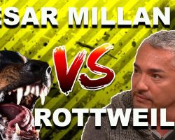 """Cesar Millan: How To Use The """"Redirection Method"""" To Calm An Aggressive, Overprotective Rottweiler"""