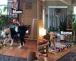 Genius Dog Learns How To Talk Using A Sound Board
