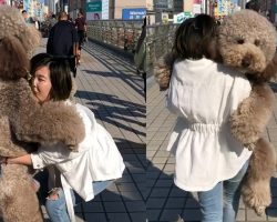 Gigantic Fluffy Poodle Dogs Love Being Carried Everywhere