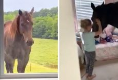 Mom Walks In On Little Girl Having A Party With A Horse In Her Bedroom