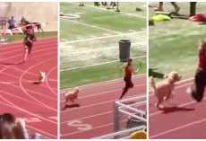 Speedy Little Dog Crashes Track Meet & Tries To Beat Lead Runner To Finish Line