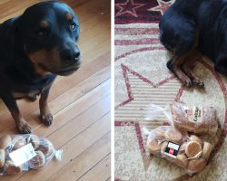 Guard Dog Gathers And Protects Family's Bread When They Leave The House