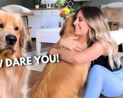 Jealous Dog Hilariously Reacts To His Favorite Human Hugging Another Dog