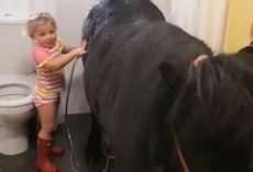 Little Girl Takes Pony Into the Bathroom for a Shower