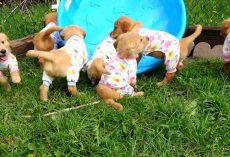 Adorable Puppies Have A Final Play Date Before Departing To Their Forever Homes