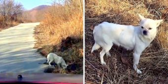 Mama Dog Hesitates At First, Then Leads Rescuers To Where She Had Given Birth