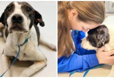 Abandoned, Shot, & Hit By A Car, Dog Musters Strength To Smile At Passerby
