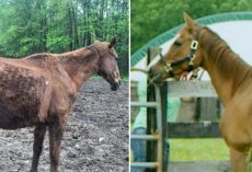 Starving Horse Becomes So Gorgeous And HAPPY