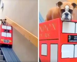 Dog With Arthritis Has Hard Time On Stairs, So Mom Builds Her The Cutest Ride