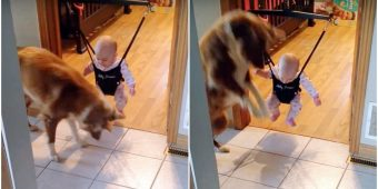 Dog Notices Baby's Shadow And Adorably Teaches Her How To Jump