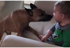Puppy Shows Baby How Much He Loves Him, Kid Can't Stop Laughing