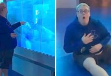 Man Curiously Taps On Aquarium Shark Display, Ends Up Getting Fright Of His Life