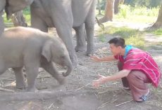 Man Asks Baby Elephant For A Hug, Has No Idea The Trouble He Was Getting Into