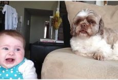 Baby And Dog Bickering Back And Forth Wins Best Video Of The Day