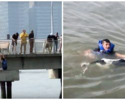Selfless Man Leaves His Own Birthday Party, Jumps Off Pier To Save Drowning Dog