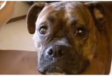 """Dog Pleads With Dad To Keep Playing, """"Needs Some Cheese To Go With Her Whine"""""""