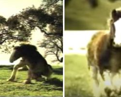 Budweiser Clydesdale Commercial Teaches Us To Never Give Up The Dream