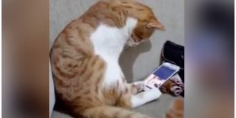 Cat Has Most Heartwarming Reaction When He Sees The Owner He Lost Years Ago