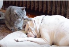 Cat Tries To Wake Up Dog For Playtime, Gives Viewers The Greatest Gift Instead
