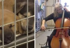 Cellist Performs for Shelter Dogs and It's Too Powerful to Miss