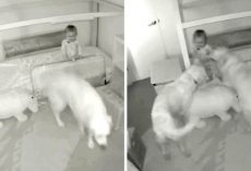 Mom Wonders How Baby Escaped Her Room, Sees Baby Cam Footage & Bursts Out Laughing