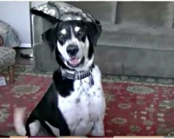 Dad Tells Dog He Got A Kitten And The Internet Is In Hysterics