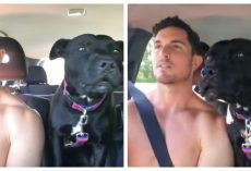 Dad Tells Dog They're Going To The Beach, Captures Dog's Antics on Camera