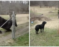 Farmer Notices Dog And Horse Acting Strange, Captures It All On Video