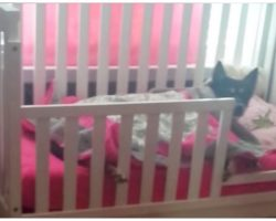 Mom Checks On Sleeping Toddler, Discovers Rescue Dog In Sweetest Position