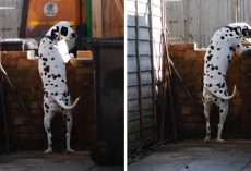 Every Friday Her Dog Runs Out Of The House, But This Time, She Managed To Film Him