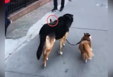 This Dog's Clever Trick Was Astonishing – And He Had An Extra Surprise In Store