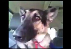 """Dog's Favorite Song Comes On The Radio. Her """"Dance"""" Moves Has The Whole Internet In Hysterics"""