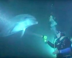 Dolphin In Distress Swims Up To Diver, Trusts Him And Asks For His Urgent Help