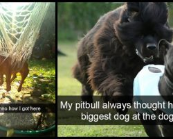 Go Ahead, Try Not To Laugh At These 15 Dog Snapchats– We Double Dog Dare Ya