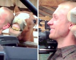 Cameraman Can't Control Laughter As Horse Begins Nibbling His Ear During Interview