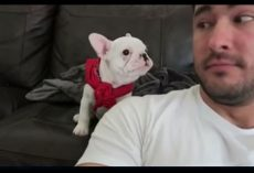 He Tells His Puppy How Handsome He is– His Puppy's Reply Couldn't Be Cuter
