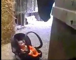 Mom Puts Crying Baby On The Floor, Then Sees Horse Reaching For Her