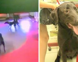Parents Worry For Missing Dog, Find Out He Ran Miles To His Favorite Daycare