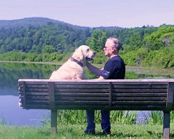 Grieving Man Found Salvation In An Abandoned Dog – Gave Each Other Purpose