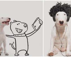 Illustrator & His Handsome Bull Terrier Team Up To Take The Most Creative Photos