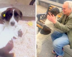 Man Lost His Dog On Streets 3 Years Ago, Breaks Down When He's Finally Found