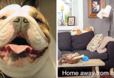Dad Knows Dog Hates It When Family Goes On Trip, So He Builds Him A Special Home
