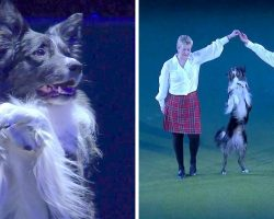 Dog Masters The Most Difficult Dance Routine, His Breathtaking Stunts Steal The Show