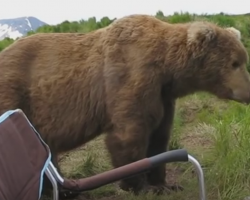 Man Relaxing In Camping Chair Gets Big Shock When A Bear Decides To Sit Next To Him