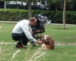 Man Takes Dog Out Of Stroller, Bends Down To Him Thinking No One's Watching