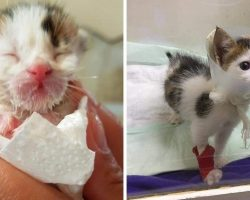 Woman Finds Tiny Kitty Dying In A Dumpster, Then Discovers The Incredible Truth