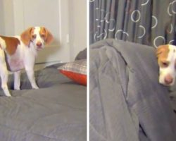Dog Gets Hysterically Busted In Bed, But Mom Has The Most Brilliant 'Punishment'