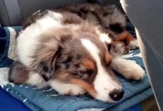 Oakley Is Sleeping In The Car When His Favorite Song Plays Over The Radio